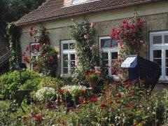 rosenbluete_3_20130808_1711244094.jpg