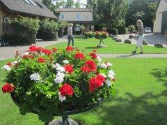 Blumenkuebelbepflanzung-kl.jpg